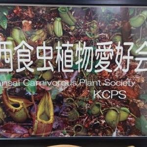 関西食虫植物愛好会 ぶりくら市出店決定!