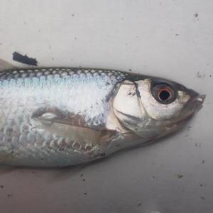 雑ぁ魚♡釣り