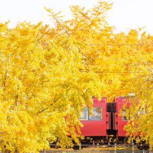 名鉄沿線の秋2019  黄葉と赤のコントラスト