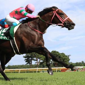 【アイビスサマーダッシュ2020】予想競走馬のコース適性を分析|3連単6点勝負