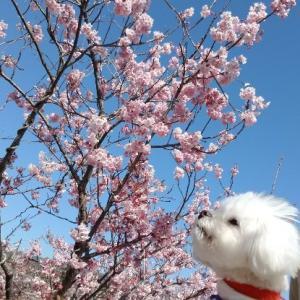 春だより~♪