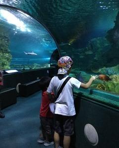 【こどもとグアム】全長100mのトンネル水槽が楽しい!こどもが喜ぶグアムの水族館「アンダーウォーターワールド」