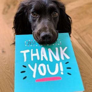 『ありがとう』と言い続けて気づいた3つの事