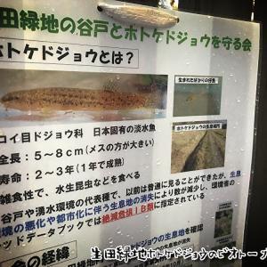 生田緑地ホトケドジョウのビオトーブ整備