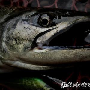 鮎沢川の尺アマゴ34cm