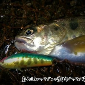 東丹沢ヤマビルの聖地でヤマメを狙う