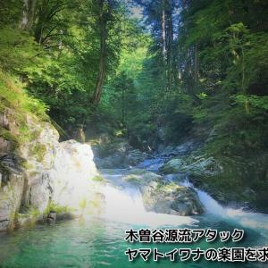 木曽谷源流アタック~ヤマトイワナの楽園を求めて