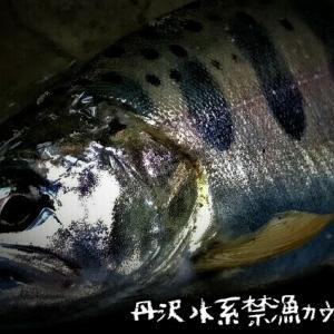丹沢水系禁漁カウントダウン