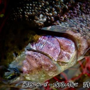 潤井川の暴君レインボー攻略に挑む