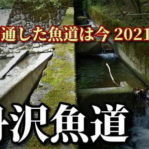 開通した魚道は今2021