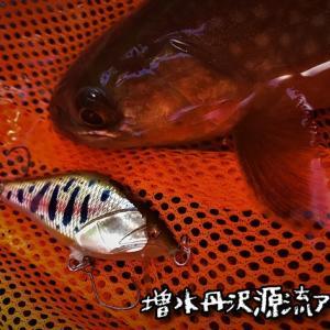 増水丹沢源流アタック!