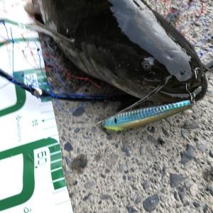 釣れるルアー!スネコンがはまるとスゴイ!スネコン90Sインプレ【釣り部100】