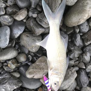 2020年9月の終わりの釣行と報告。ルアー水中動画youtube開設【焼津ルアー釣り日記④】