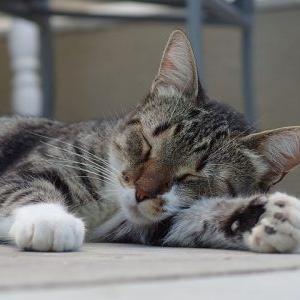 睡眠負債の意味と解消方法。金スマで紹介されたスタンフォード式で睡眠を深くする方法とは?