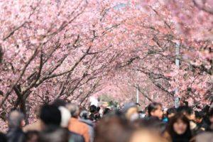 花は咲くアニメ版の動画とユーチューブ。