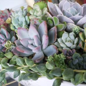 寄せ植えを綺麗に維持するのって難しいよね!?