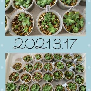 今年種を蒔いた苗の報告