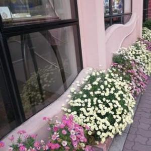 花たちからのエール.。:・・.。:*・