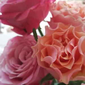ステホームで薔薇.。:・・.。:*・★