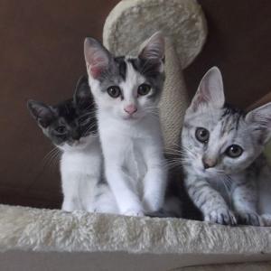 なかよし3姉妹猫・・・(笑)