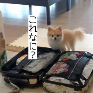日本に行くよ(2019.3.26)