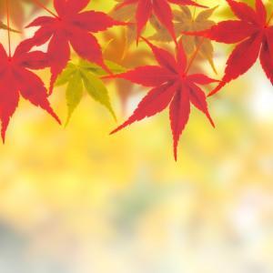 平屋の電気代レポート2019年11月【4LDK・オール電化・東京電力】