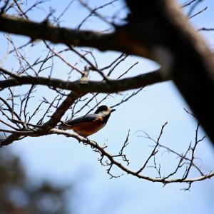 鳥を撮りに散歩いきました。No.5 (初めてなので中望遠で練習!)