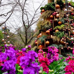 HANA・BIYORI ガーデン散策 2020 クリスマス前にスタバで 後編