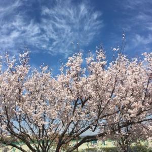 桜の開花が早くなると思い出す 息子の旅立ち