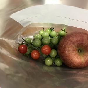 ミニトマトの追熟 熟していないミニトマトをエチレンをたくさん出す『リンゴ』と一緒に保存用ビニール袋に入れておくことにしました。  #トマト追熟