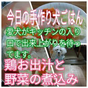 【今日の手作り犬ご飯】鶏お出汁に犬も大喜びの野菜煮込み
