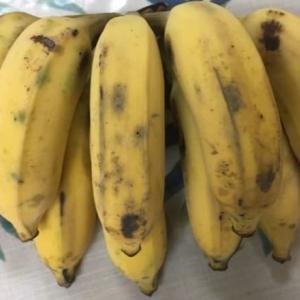 台湾でバナナみたいで違う⁉芭蕉をどこで買えるか探してみた