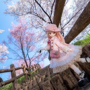 朝から桜とドール撮影してきました!NEEWERの可倒センターポール三脚もなかなか使える!?