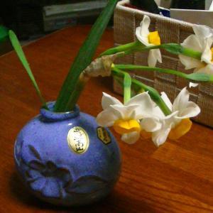 日本水仙を花瓶に飾って