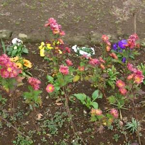 公園の花壇を見に行って