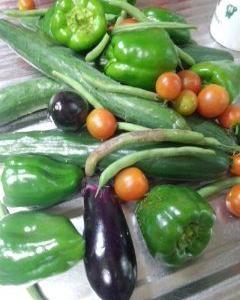 貸農園の実物野菜の収穫して