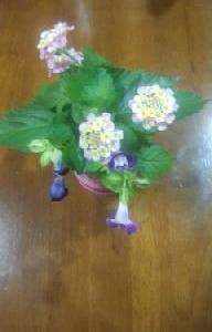 食卓の花はランタナとロベリアで