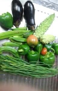 またまた夏野菜の収穫です