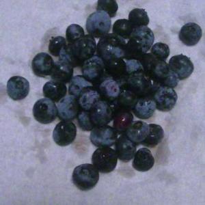 ブルーベリーを収穫しました