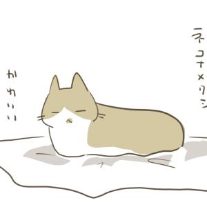 ネコナメクジ
