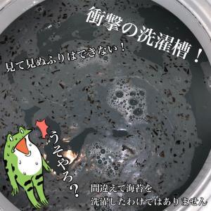 洗濯機の中に潜むワカメの正体