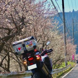 【奈良県・京都府】月ヶ瀬梅林〜南山城村散策ツーリング