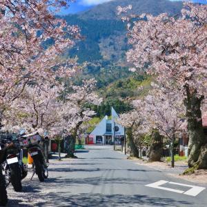 【京都府】丹後半島、春の息吹を感じるツーリング