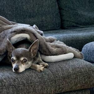ウチの愛犬です。