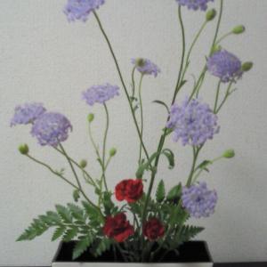 自由花(ブルーレースフラワー・カーネーション・レザーファン)