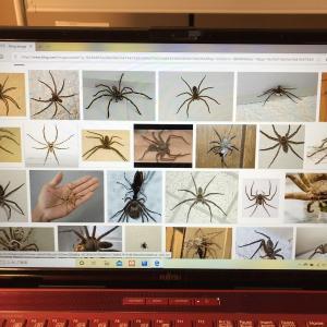 蜘蛛嫌いを克服する方法②