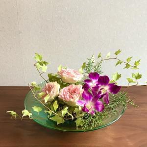 日常の花(ヘデラ、デンファレ)