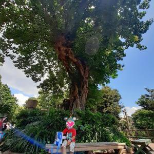 故郷を感じるアコウの木