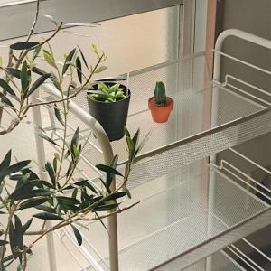 困った!飾る・置き場所がない時のアイテム~キッチンワゴンで飾る植物~
