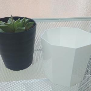 ブログへの思い&プラスチック製の白い鉢(カネヤ)購入しました